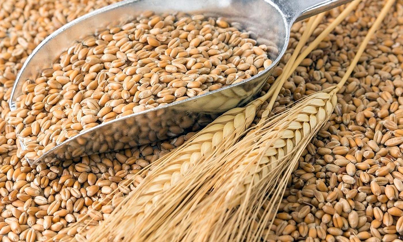 o trigo empeora a esclerose múltiple e varias enfermidades